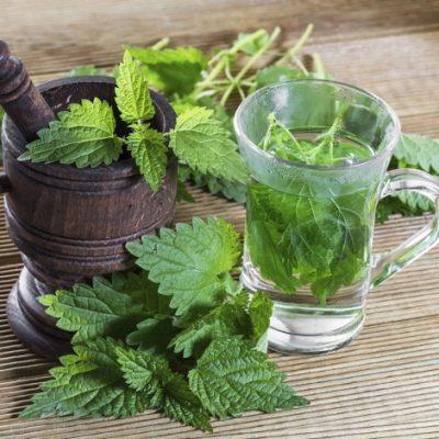 Urzica, planta care ne vitaminizează şi mineralizează organismul
