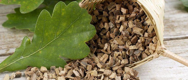 Scoarța de stejar - proprietăți și beneficii