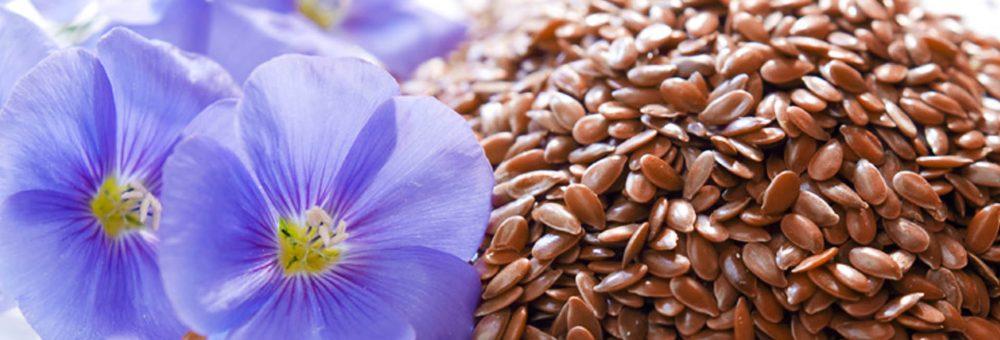 Beneficiile surprinzătoare ale semințelor de in